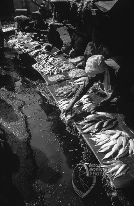 Jakarta Fish Market, Java, Indonesia. An example of Landscape, Architecture, Travel and Tourism Photography, using dramatic lighting and striking composition by Nigel Forster ABIPP. Commission Nigel Forster ABIPP to capture your business, event, attraction or location with dramatic use of light and striking composition.