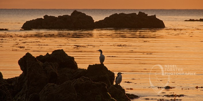 Cormorants at Dawn, Kaikoura, New Zealand. An example of Landscape, Architecture, Travel and Tourism Photography, using dramatic lighting and striking composition by Nigel Forster ABIPP. Commission Nigel Forster ABIPP to capture your business, event, attraction or location with dramatic use of light and striking composition.